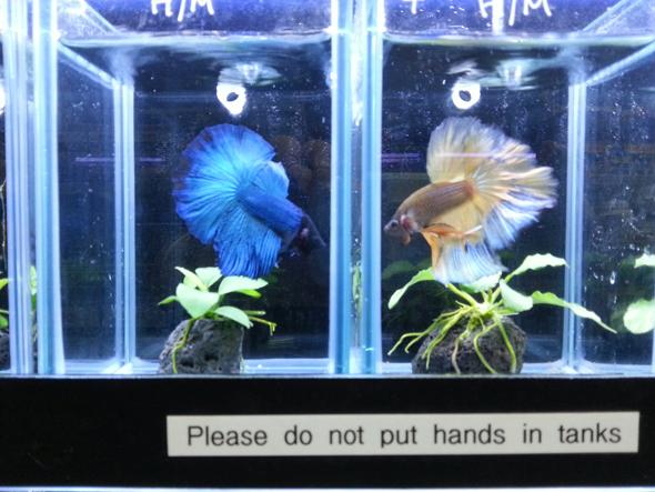 B C Aquarium Aquarium Shop Sydney Freshwater Aquarium Setup News