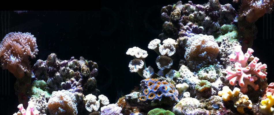 B&C Aquarium, Aquarium shop Sydney, Freshwater aquarium